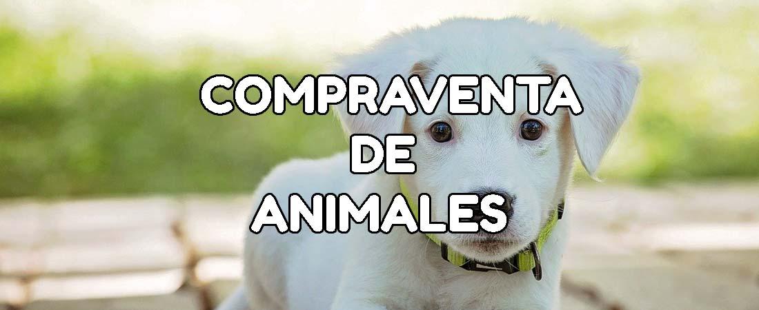 contrato compraventa animales